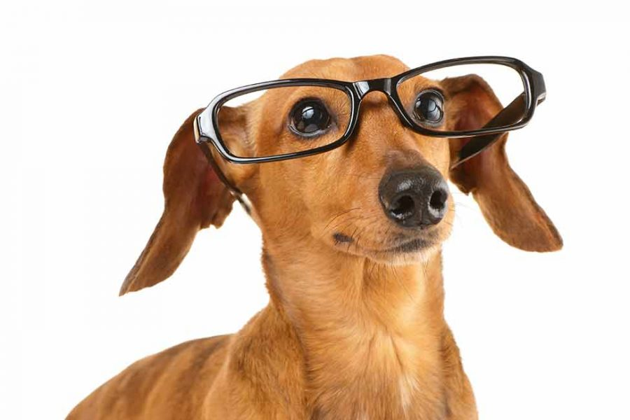 canine-enrichment-stimulating-your-dogs-brain